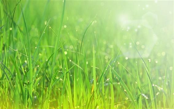 Papéis de Parede Verão, grama verde, após a chuva, gotas da água