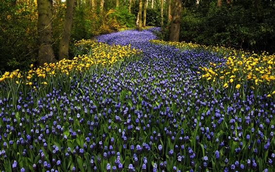 Fond d'écran Les Pays-Bas, Keukenhof Park, jacinthes fleurs, tulipes, arbres