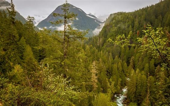 Wallpaper USA, Washington, Marblemount, forest, mountains, stream