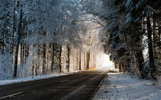 Обои Зима, дорога, деревья, снег