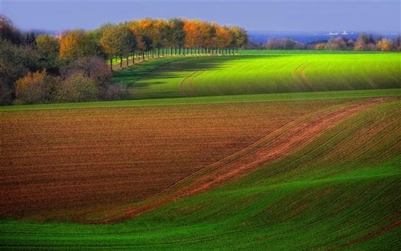 Fond d'écran champ d'Automne à la ferme, arbres, vert et brun, de beaux paysages