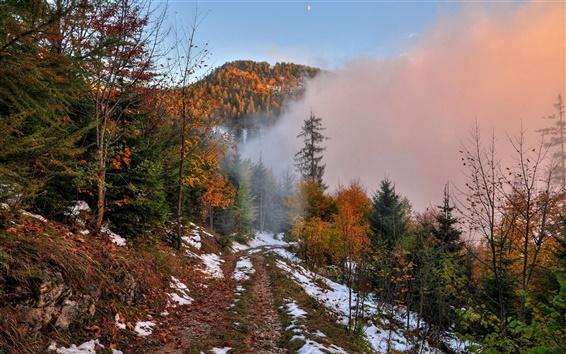 Fond d'écran Automne, montagne, sentier, neige, forêt, arbres, brouillard, l'aube