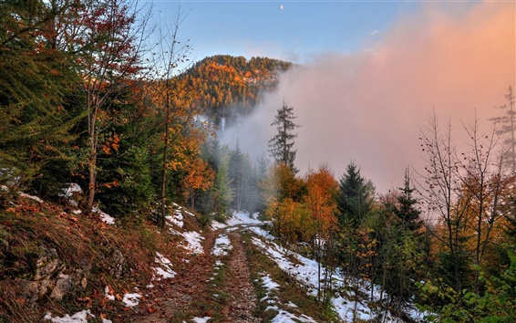 Wallpaper Autumn, mountain, footpath, snow, forest, trees, fog, dawn