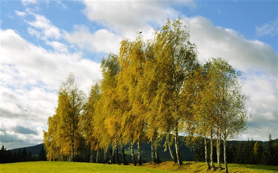 Fond d'écran arbres d'automne, bouleau, nuages