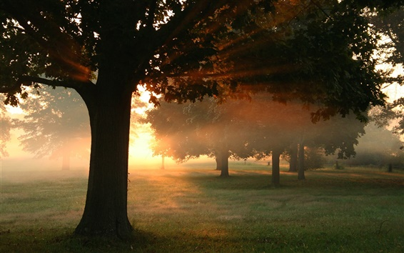 Fond d'écran Automne, arbres, forêt, herbe, les rayons du soleil, le matin