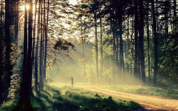 Обои Красивая природа, утро, деревья, солнечные лучи, дорога
