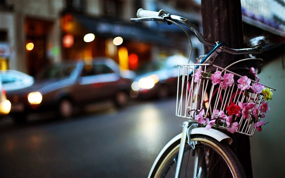 Wallpaper Bike, flowers, night, city