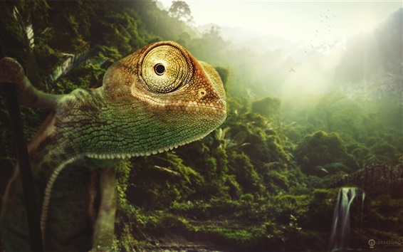 Wallpaper Chameleon close-up, nature, birds, sun rays, Desktopography pictures