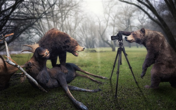 Wallpaper Creative pictures, bear is a photographer, catch moose