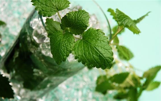 Обои Напитки мохито, зеленые листья мяты, стеклянная чашка