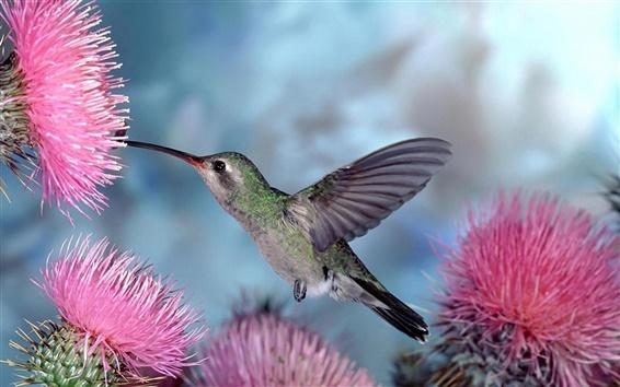 Wallpaper Flying bird, hummingbirds gather nectar, pink flowers
