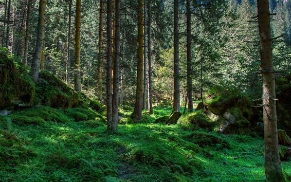 Wallpaper Forest, trees, grass, moss