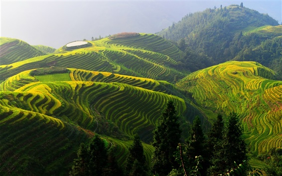 Wallpaper Longji rice terraces, China beautiful countryside