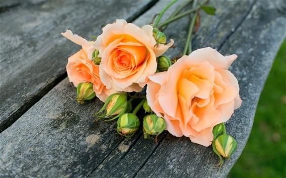 Wallpaper Orange rose flowers