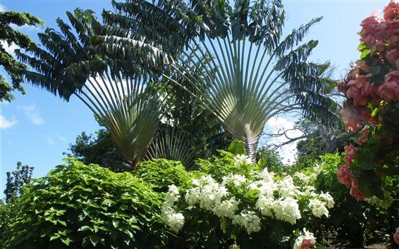 Wallpaper Ravinala, flowers, Madagascar