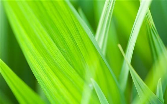 Wallpaper Summer green, plants, grass close-up