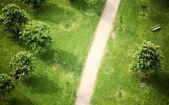 Papéis de Parede Top ver o parque, grama, árvores, trajeto