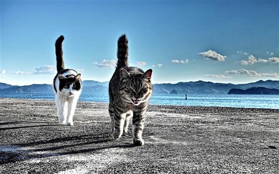 Hintergrundbilder Zwei Katzen am Strand zu Fuß