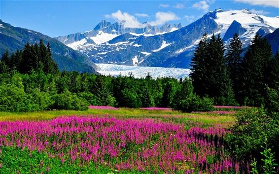 Fond d'écran Etats-Unis, Alaska, montagnes, neige, fleurs, herbe, forêt
