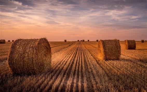 Fond d'écran Champ de blé, le foin, l'été, le coucher du soleil
