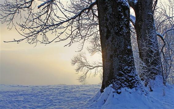 Обои Зима, деревья, снег, сумерки