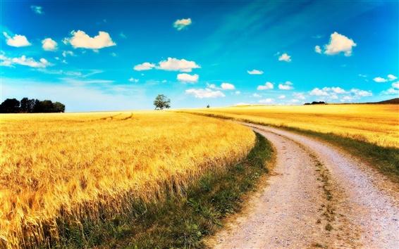 Wallpaper Yellow wheat fields, road, blue sky, clouds