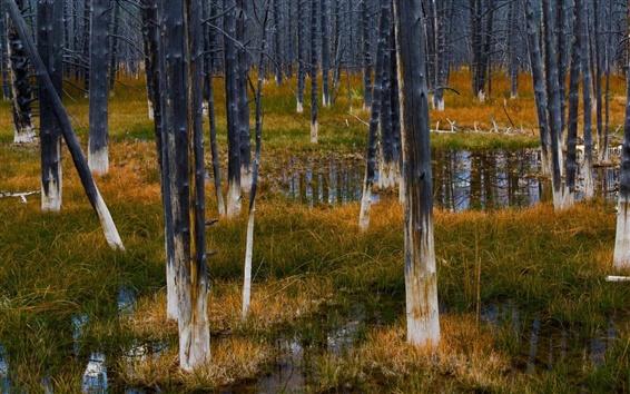 Papéis de Parede Yellowstone National Forest