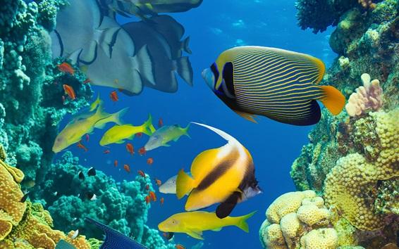 Обои Красивая рыба в море, подводный мир, коралловые рифы