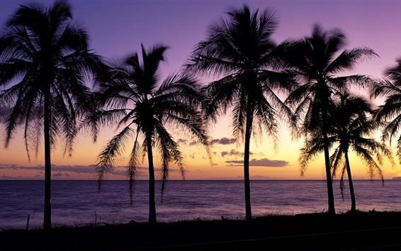 Fond d'écran Magnifique coucher de soleil, silhouette, palmiers, Maui, Hawaii, États-Unis