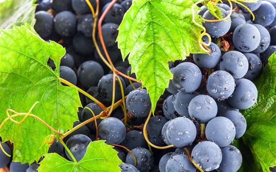 Wallpaper Black grapes, green leaves, fruits close-up