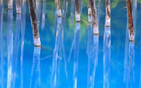 Wallpaper Blue Pond, trees, water reflection, Japan