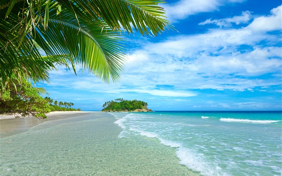 Wallpaper Blue sea and sky, beach, coast, palm trees, tropical, water