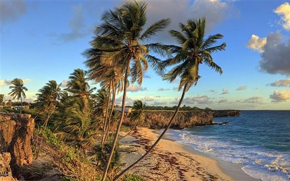 Wallpaper Bottom Bay Beach, Barbados, Caribbean, beautiful tropical scenery