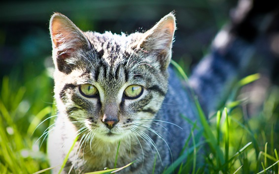 Wallpaper Cute kitten in the grass, green eyes
