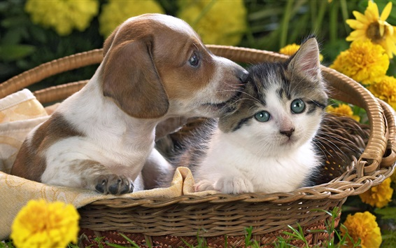 Wallpaper Cute puppy and kitten in the basket