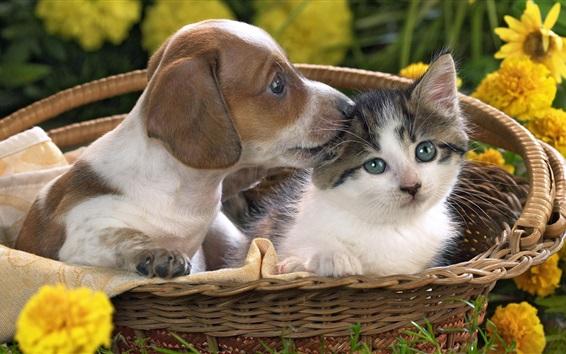 Papéis de Parede filhote de cachorro bonito e gatinho na cesta
