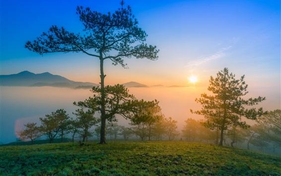 Fond d'écran Aube nature paysage, matin, montagnes, arbres de pin, le brouillard, le lever du soleil