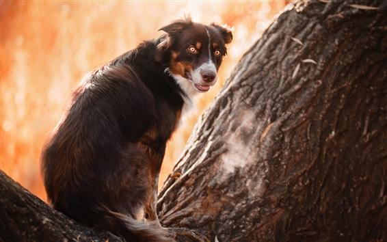 Обои Собака на дереве, оглядываясь назад