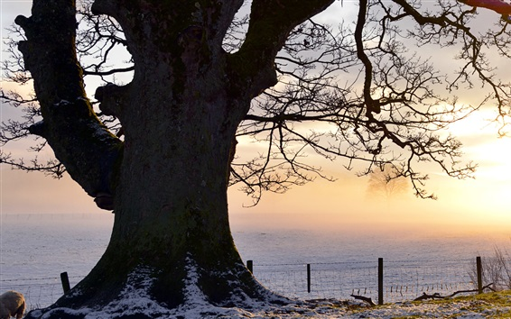 Wallpaper Evening light, snowy field, tree, fence, Perthshire, UK
