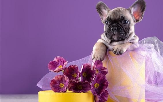 Обои Французский щенок, цветы