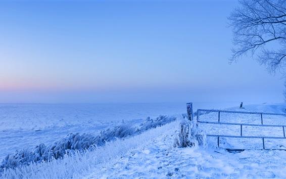 Fond d'écran Congelés, neige, hiver, froid, Pays-Bas