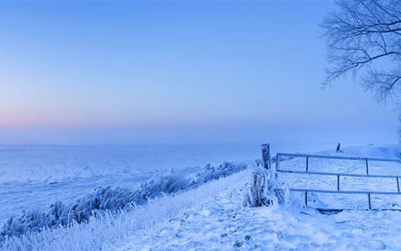 Wallpaper Frozen, snow, winter, cold, Netherlands