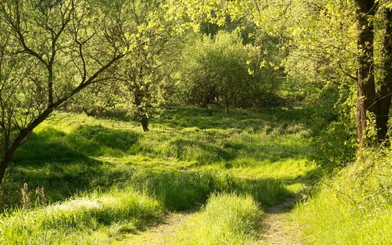 Обои Германия, Бавария, Regenstauf, лес, трава, деревья, зеленый, лето