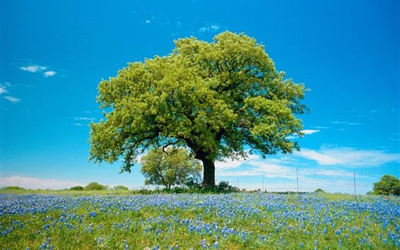 Wallpaper Grape hyacinth flowers, tree, spring, grass, blue sky