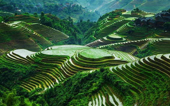 Wallpaper Guangxi Longsheng rice terraces, beautiful landscape, China