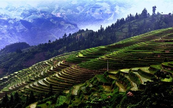 Papéis de Parede Jiaban Terraces, China Guizhou, montanhas, árvores, campos