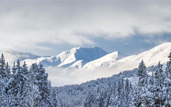 Papéis de Parede Kenai Montanhas, árvores, neve espessa, floresta nacional de Chugach, Alaska, EUA