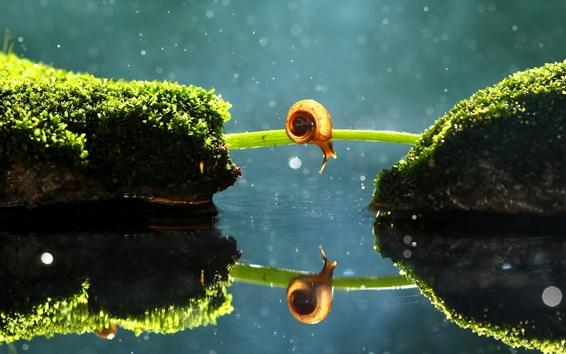Papéis de Parede caracol solitário, ponte grama, musgo, reflexão da água