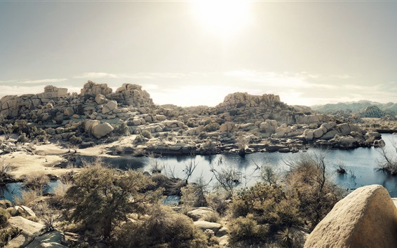 Обои Пустыня Мохаве, озеро, трава, камни, Дерево Джошуа Национальный Парк, Калифорния, США