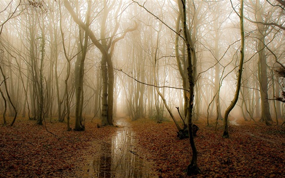 Wallpaper Morning forest, trees, fog, water, autumn